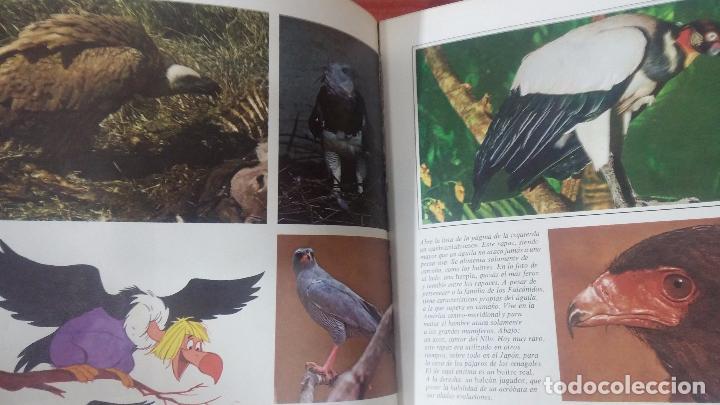 Enciclopedias antiguas: ENCICLOPEDIA DISNEY - Foto 45 - 83573860