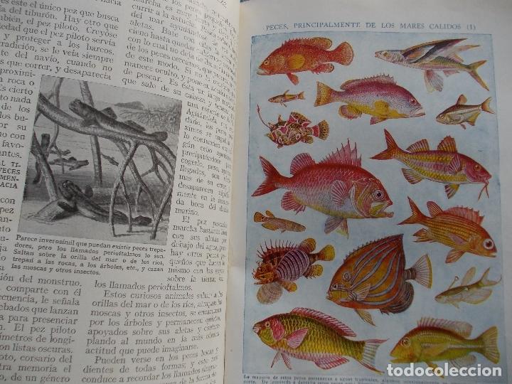 Enciclopedias antiguas: EL TESORO DE LA JUVENTUD FALTA EL 14 DE 17 EN TOTAL - Foto 7 - 175976323