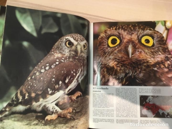 Enciclopedias antiguas: El mundo de los animales. Noguer Rizzoli Larousse - Foto 5 - 183406447
