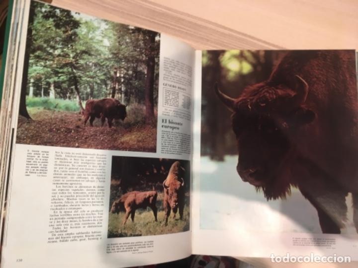 Enciclopedias antiguas: El mundo de los animales. Noguer Rizzoli Larousse - Foto 6 - 183406447