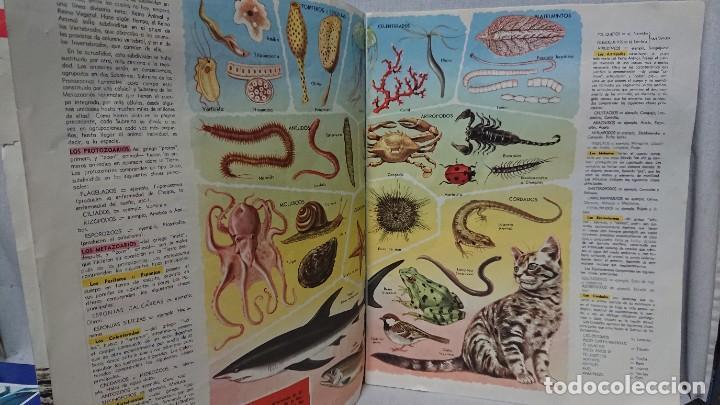 Enciclopedias antiguas: ENCICLOPEDIA ESTUDIANTIL N° 0 AÑO I - 27 NOVIEMBRE 1962 - Foto 5 - 198340855