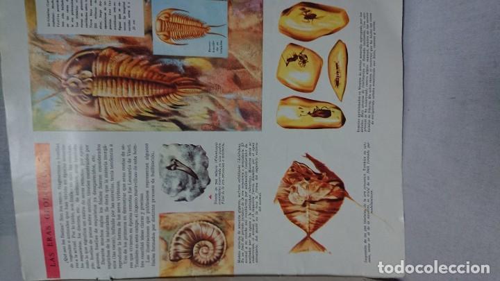 Enciclopedias antiguas: ENCICLOPEDIA ESTUDIANTIL N° 0 AÑO I - 27 NOVIEMBRE 1962 - Foto 8 - 198340855