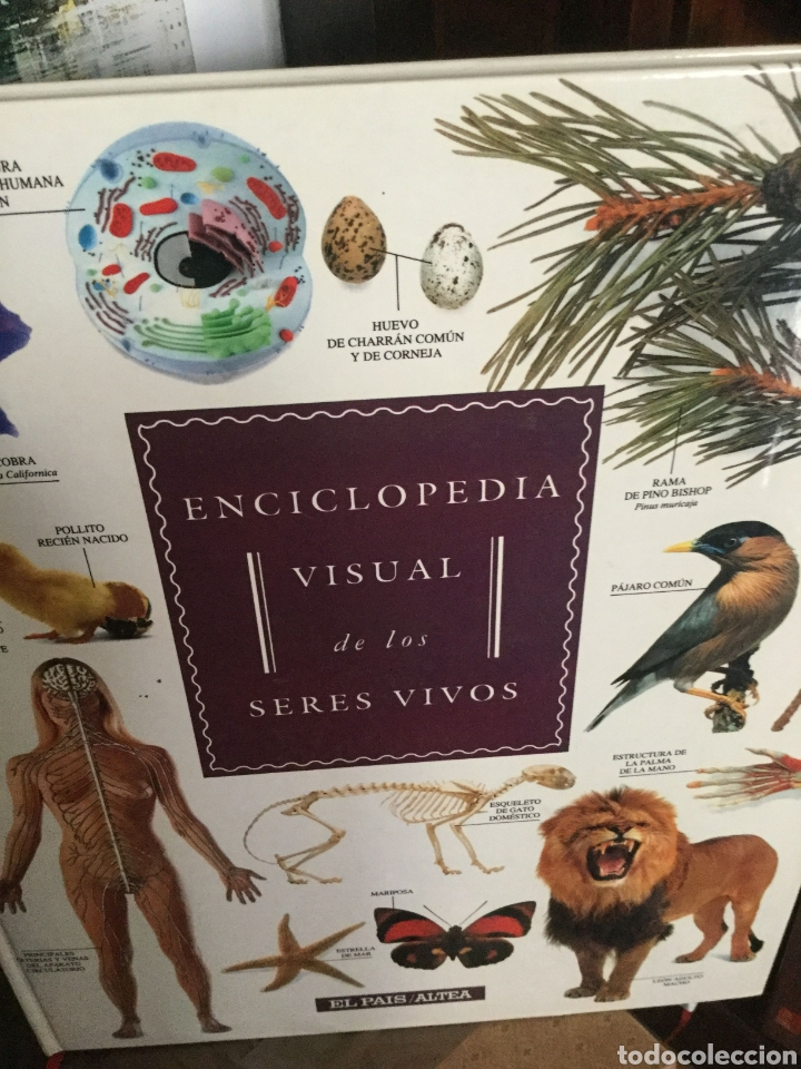 Enciclopedias antiguas: Enciclopedia visual de los seres vivos.El Pais/Altea. 3 Tomos Tres volúmenes - Foto 4 - 208422006