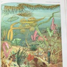 Enciclopedias antiguas: ENCICLOPEDIA ILUSTRADA SEGUI . MODERNISTA GRABADOS ESPECTACULARES. Lote 221954231