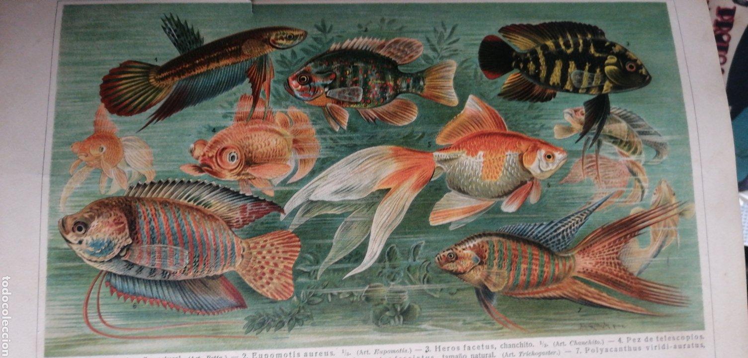 Enciclopedias antiguas: (1908 Edicion Historica) Enciclopedia Universal Ilustrada Europeo- Americana,Tomo II Jose Espasa - Foto 6 - 243186185