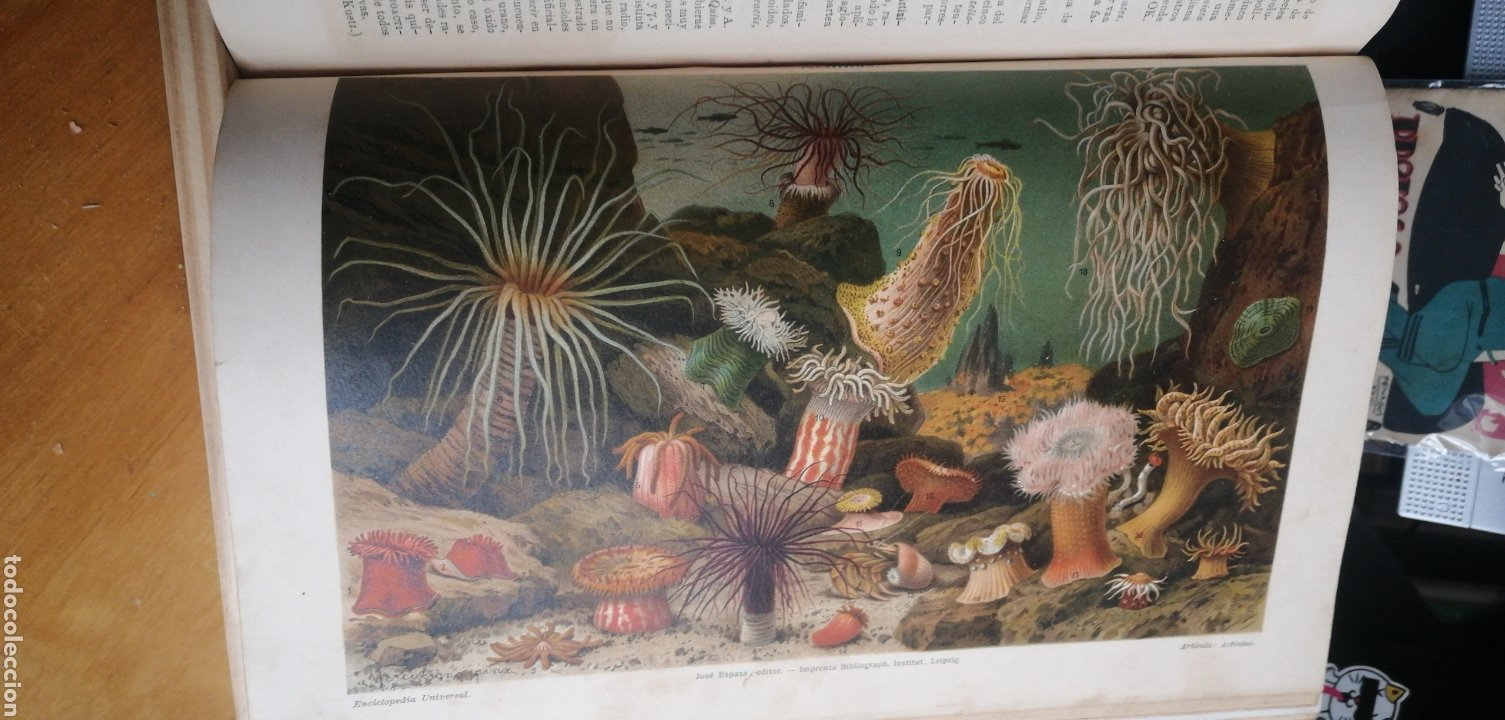 Enciclopedias antiguas: (1908 Edicion Historica) Enciclopedia Universal Ilustrada Europeo- Americana,Tomo II Jose Espasa - Foto 7 - 243186185