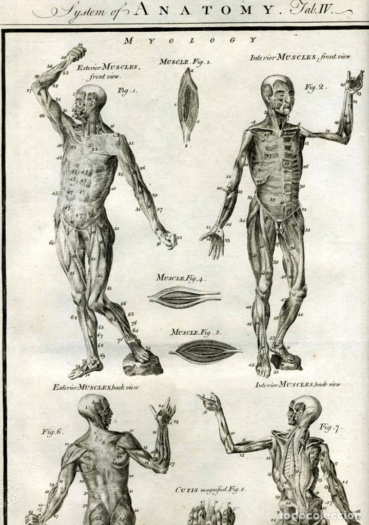 Enciclopedias antiguas: The New Royal Cyclopaedia, and Encyclopaedia... 3 tomos, 1788. G. Selby Howard/Hogg. 160 grabados - Foto 22 - 243794590