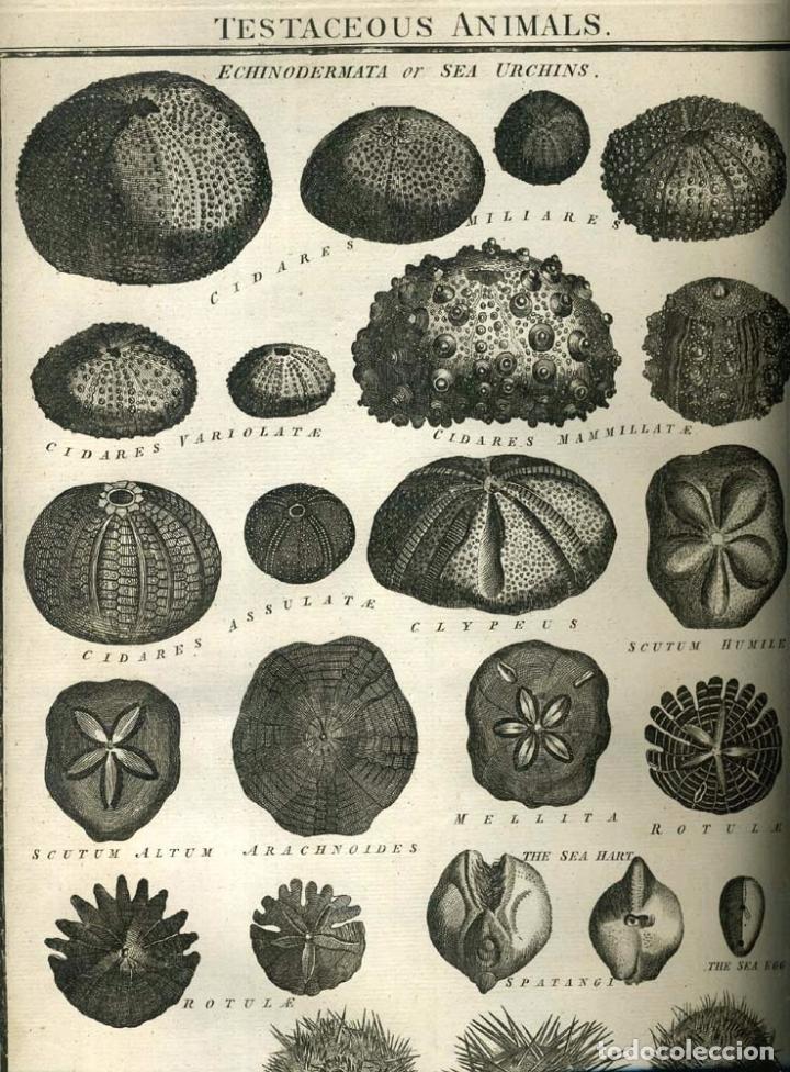 Enciclopedias antiguas: The New Royal Cyclopaedia, and Encyclopaedia... 3 tomos, 1788. G. Selby Howard/Hogg. 160 grabados - Foto 39 - 243794590