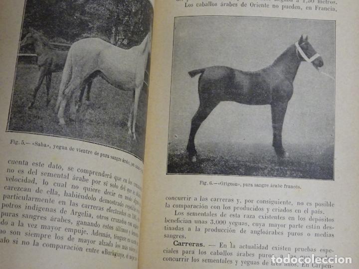 Enciclopedias antiguas: LIBRO ENCICLOPEDIA AGRÍCOLA RAZAS CABALLARES CABALLOS SALVAT EDITORES BARCELONA AÑO 1927 527P. 560GR - Foto 4 - 254939175