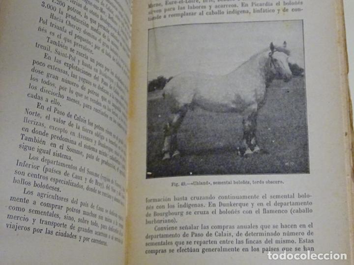Enciclopedias antiguas: LIBRO ENCICLOPEDIA AGRÍCOLA RAZAS CABALLARES CABALLOS SALVAT EDITORES BARCELONA AÑO 1927 527P. 560GR - Foto 6 - 254939175