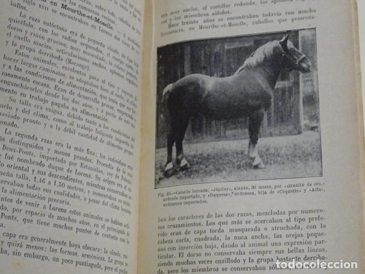 Enciclopedias antiguas: LIBRO ENCICLOPEDIA AGRÍCOLA RAZAS CABALLARES CABALLOS SALVAT EDITORES BARCELONA AÑO 1927 527P. 560GR - Foto 7 - 254939175