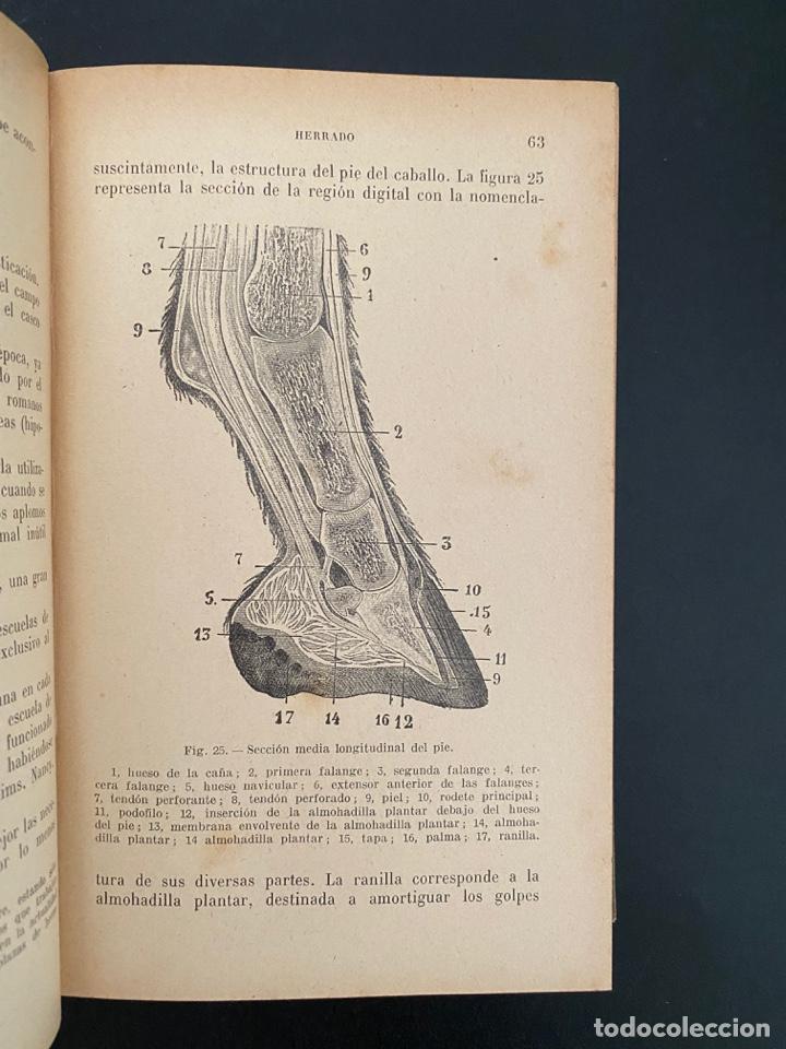 Enciclopedias antiguas: HIGIENE Y ENFERMEDADES DEL GANADO. P. CAGNY & R. GOUIN. ENCICLOPEDIA AGRICOLA SALVAT. BARCELONA,1924 - Foto 4 - 270125363