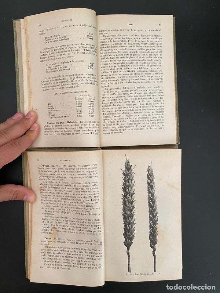 Enciclopedias antiguas: CEREALES. 2 TOMOS. C.V. GAROLA & P. LAVALLEE. NCICLOPEDIA AGRICOLA SALVAT. 2ª ED. BARCELONA, 1930 - Foto 4 - 270126188