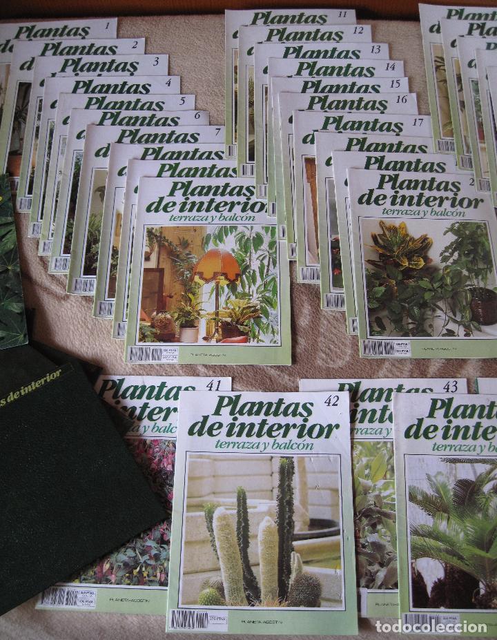 Enciclopedias: GRAN ENCICLOPEDIA PLANTAS DE INTERIOR Y JARDINERIA • Planeta Agostini (50 fascículos + tapas) - Foto 3 - 84345940
