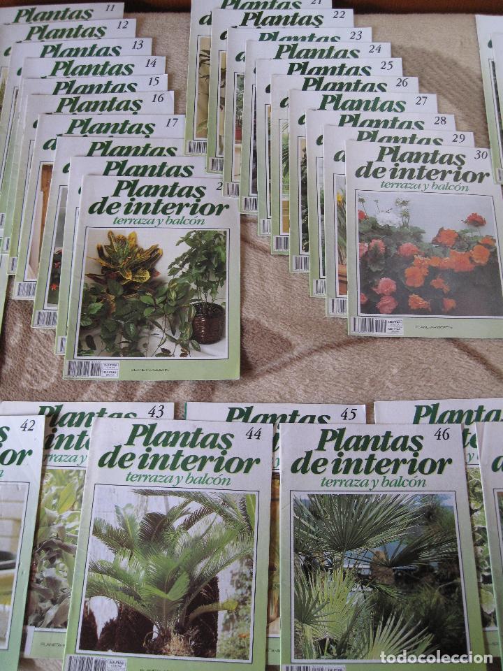 Enciclopedias: GRAN ENCICLOPEDIA PLANTAS DE INTERIOR Y JARDINERIA • Planeta Agostini (50 fascículos + tapas) - Foto 4 - 84345940