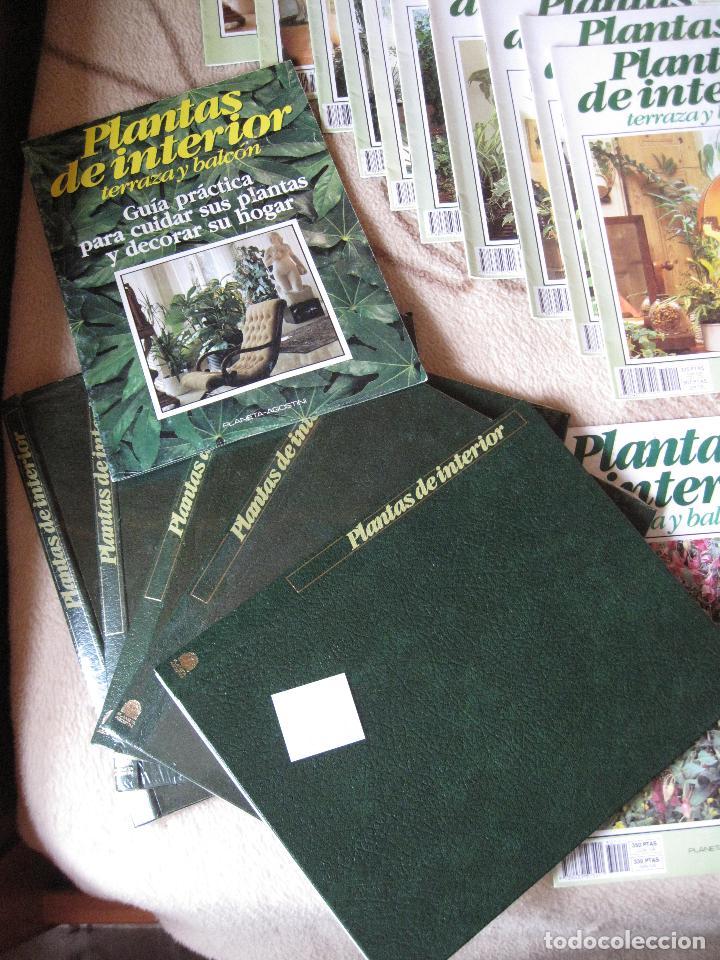 Enciclopedias: GRAN ENCICLOPEDIA PLANTAS DE INTERIOR Y JARDINERIA • Planeta Agostini (50 fascículos + tapas) - Foto 6 - 84345940