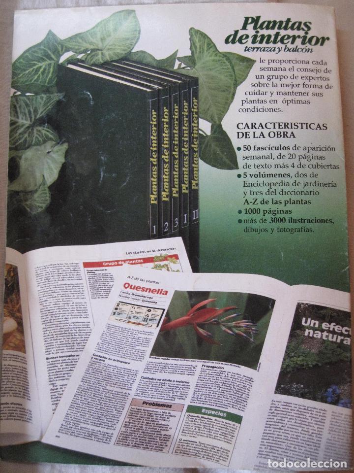 Enciclopedias: GRAN ENCICLOPEDIA PLANTAS DE INTERIOR Y JARDINERIA • Planeta Agostini (50 fascículos + tapas) - Foto 8 - 84345940