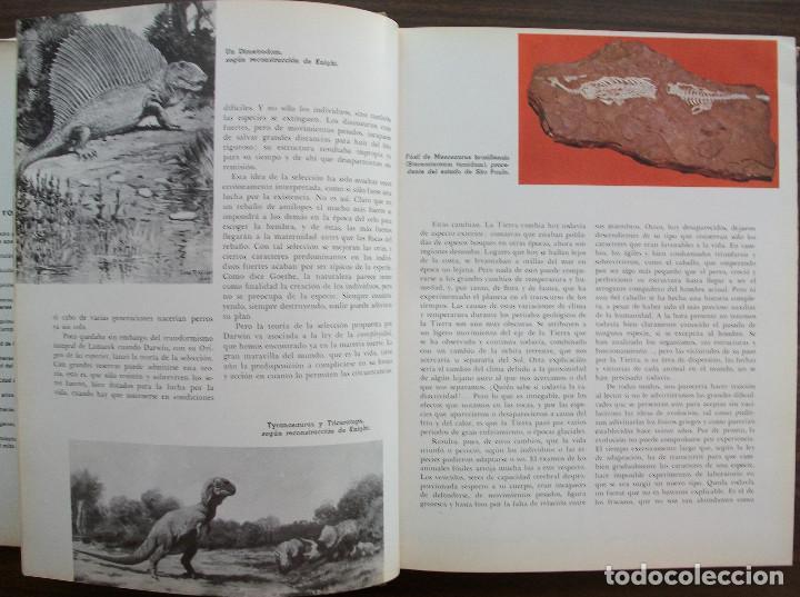 Enciclopedias: HISTORIA DEL MUNDO. PIJOAN. TOMO I - Foto 2 - 135550622