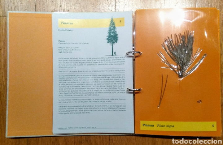 Enciclopedias: 1998 Enciclopedia Catalana, LHerbari, 3 carpetas - Foto 2 - 144408097