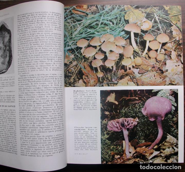 Enciclopedias: HISTORIA NATURAL - VIDA DE LOS ANIMALES, DE LAS PLANTAS Y DE LA TIERRA - 4 TOMOS - Foto 8 - 147739494