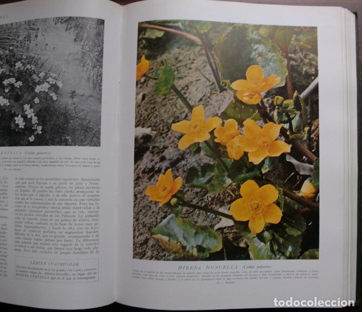 Enciclopedias: HISTORIA NATURAL - VIDA DE LOS ANIMALES, DE LAS PLANTAS Y DE LA TIERRA - 4 TOMOS - Foto 10 - 147739494