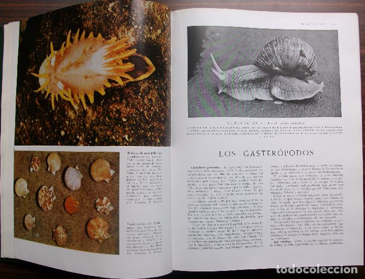 Enciclopedias: HISTORIA NATURAL - VIDA DE LOS ANIMALES, DE LAS PLANTAS Y DE LA TIERRA - 4 TOMOS - Foto 12 - 147739494