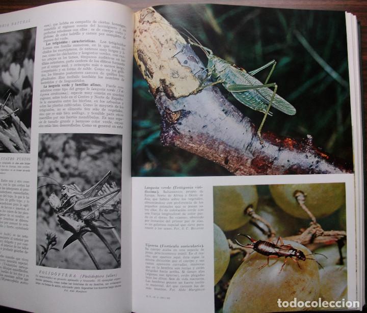 Enciclopedias: HISTORIA NATURAL - VIDA DE LOS ANIMALES, DE LAS PLANTAS Y DE LA TIERRA - 4 TOMOS - Foto 14 - 147739494