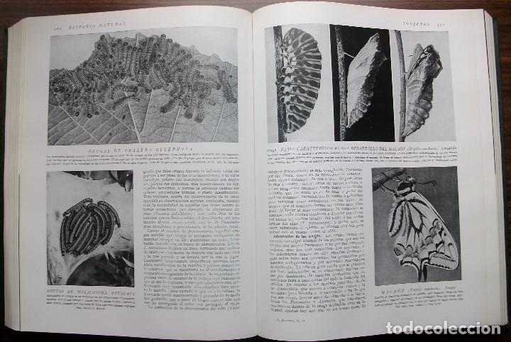 Enciclopedias: HISTORIA NATURAL - VIDA DE LOS ANIMALES, DE LAS PLANTAS Y DE LA TIERRA - 4 TOMOS - Foto 15 - 147739494