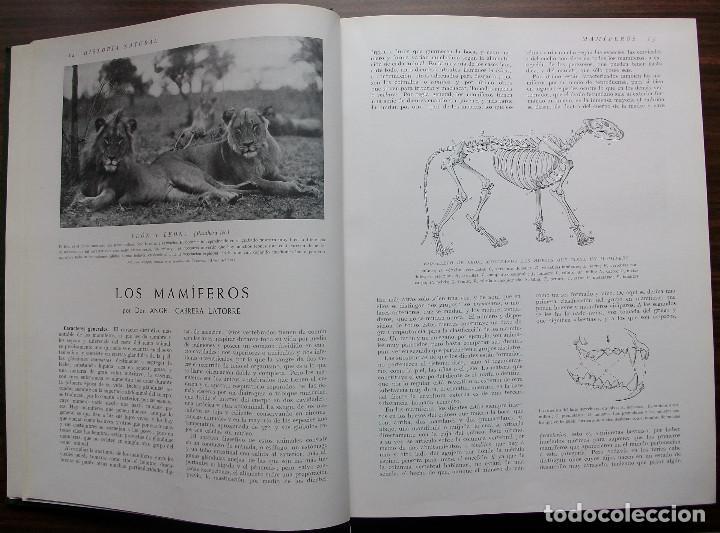 Enciclopedias: HISTORIA NATURAL - VIDA DE LOS ANIMALES, DE LAS PLANTAS Y DE LA TIERRA - 4 TOMOS - Foto 17 - 147739494