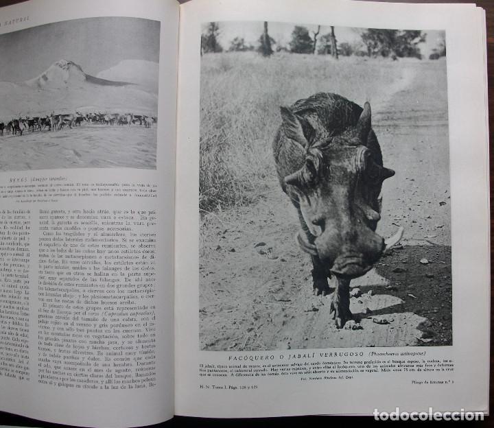 Enciclopedias: HISTORIA NATURAL - VIDA DE LOS ANIMALES, DE LAS PLANTAS Y DE LA TIERRA - 4 TOMOS - Foto 18 - 147739494