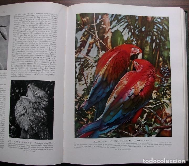 Enciclopedias: HISTORIA NATURAL - VIDA DE LOS ANIMALES, DE LAS PLANTAS Y DE LA TIERRA - 4 TOMOS - Foto 19 - 147739494