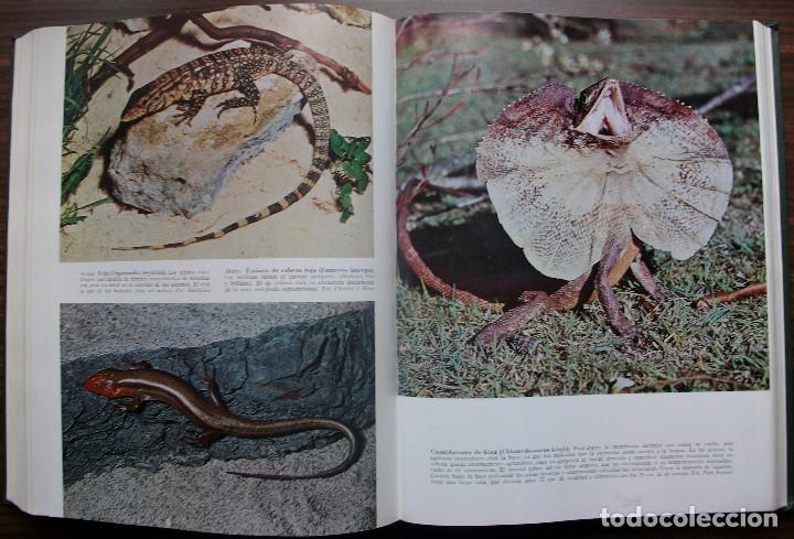 Enciclopedias: HISTORIA NATURAL - VIDA DE LOS ANIMALES, DE LAS PLANTAS Y DE LA TIERRA - 4 TOMOS - Foto 20 - 147739494