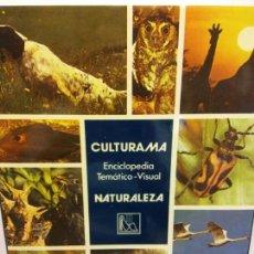 Enciclopedias: BJS.ENCICLOPEDIA TEMATICO-VISUAL.NATURALEZA.EDT, DANAE.BRUMART TU LIBRERIA.. Lote 151688138