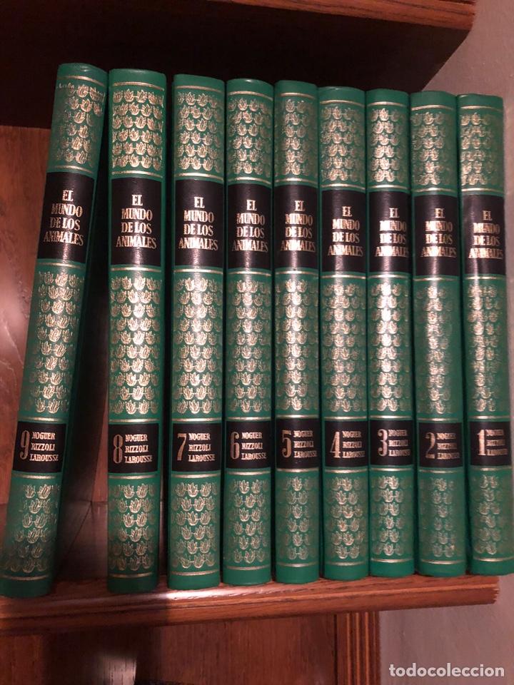 ENCICLOPEDIA (Libros Nuevos - Diccionarios y Enciclopedias - Enciclopedias)