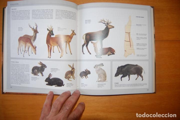 Enciclopedias: Cocina con ideas. Aves y caza. - Foto 3 - 172964615