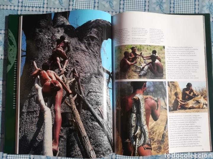 Enciclopedias: Enciclopedia Naturaleza Salvaje - Foto 5 - 179149405