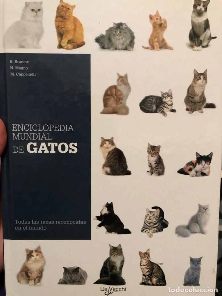 ENCICLOPEDIA MUNDIAL DE GATOS DE VECCHI TAPA DURA (Libros Nuevos - Diccionarios y Enciclopedias - Enciclopedias)