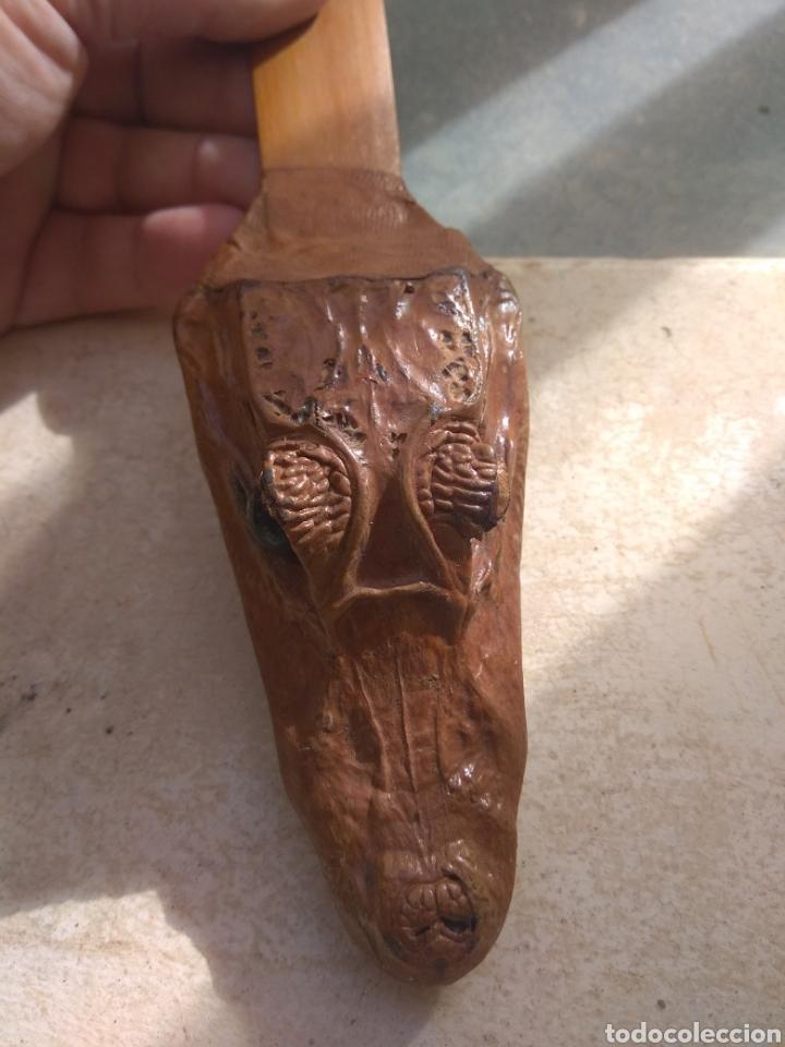 Escribanía: Antiguo Abrecartas Cabeza de Cría de Caimán Disecado y Madera - - Foto 7 - 224798325