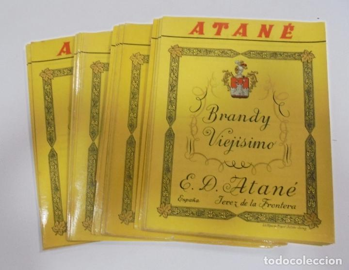 LOTE DE 50 ETIQUETAS DE BRANDY VIEJISIMO. ATANE. JEREZ DE LA FRONTERA. 10 X 13CM (Coleccionismo - Etiquetas)