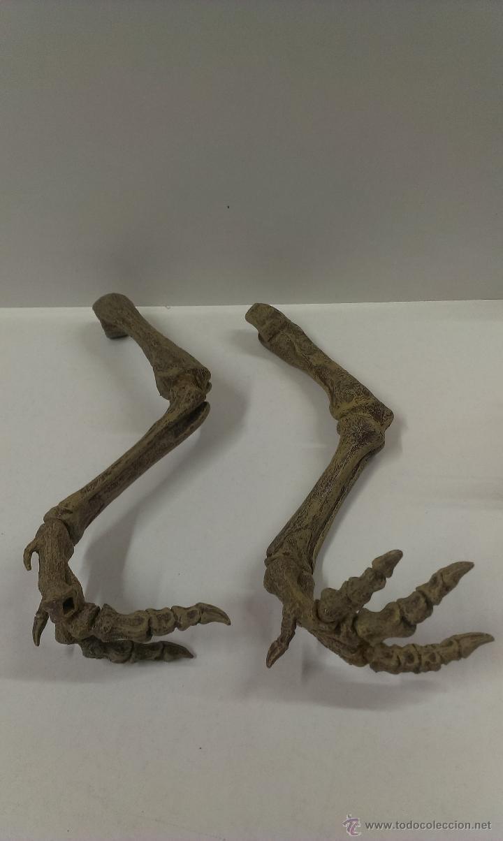 Figuras de Goma y PVC: ESQUELETO DE DINOSAURIO . TIRANOSAURIO REX . - Foto 19 - 53990945