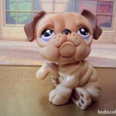 Figuras de Goma y PVC: RDP MASCOTA MUÑECO PET SHOP PERRO BULLDOG HASBRO . Lote 101116399
