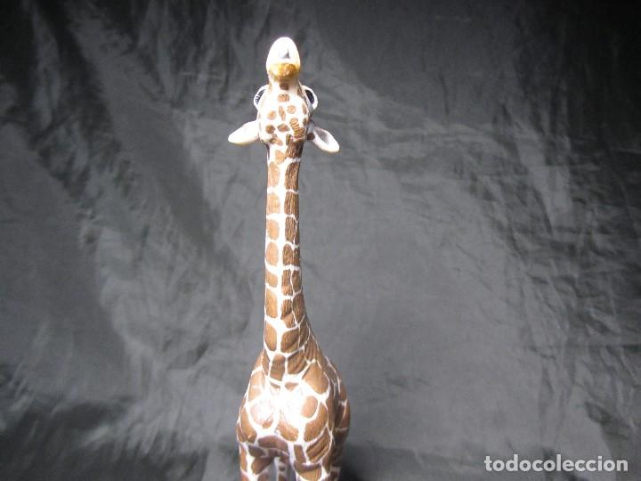 Figuras de Goma y PVC: JIRAFA SCHLEICH ALIMENTANDOSE 2008 17,5 CM MUY BUEN ESTADO - Foto 6 - 137491686