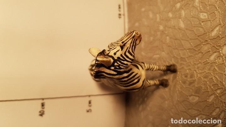 Figuras de Goma y PVC: Cebra de juguete Schleich - Foto 3 - 175126495