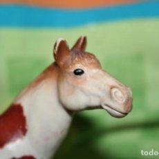Figuras de Goma y PVC: FIGURA CABALLO PINTO PAINT HORSE DE SCHLEICH AÑO 1998 REF 13241. Lote 200185932
