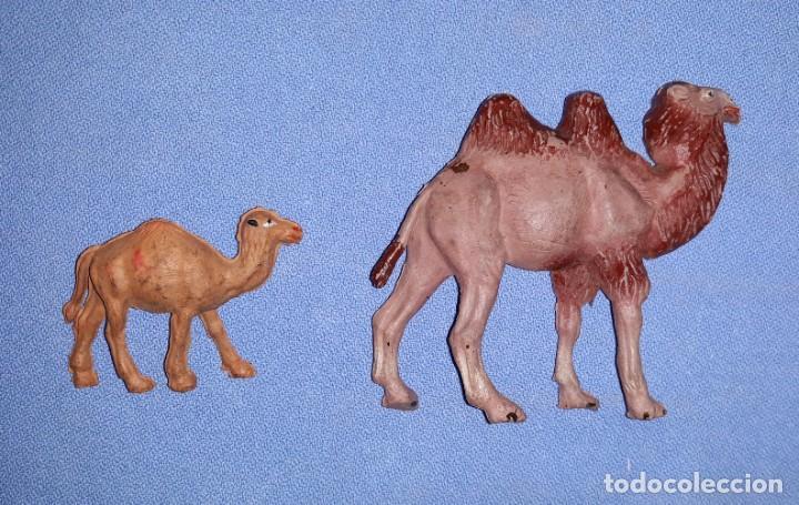 Figuras de Goma y PVC: CAMELLO Y CRIA DE JECSAN SERIE FIERAS HISTORIA NATURAL EN GOMA ORIGINALES AÑOS 50 - Foto 3 - 205174795