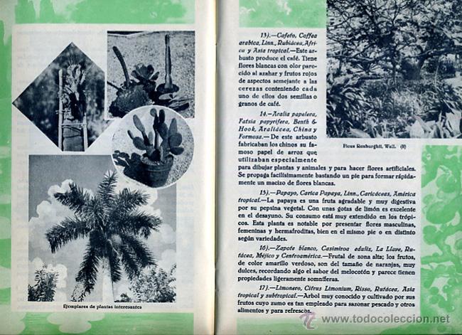 Folletos de turismo: FOLLETO JARDIN DE ACLIMATACION DE LA OROTAVA , TENERIFE ,CANARIAS ,ORIGINAL ,BO - Foto 3 - 43584833