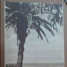 Folletos de turismo: TRIPTICO DE SANTA CRUZ DE TENERIFE , PATRONATO NACIONAL DE TURISMO, CON FOTOS . Lote 55059291