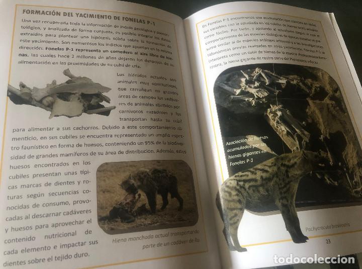 Folletos de turismo: Folleto de visita turística a Centro Paleontológico Fonelas P-1. Guadix, Granada, Andalucía. 28 pp. - Foto 5 - 194348860