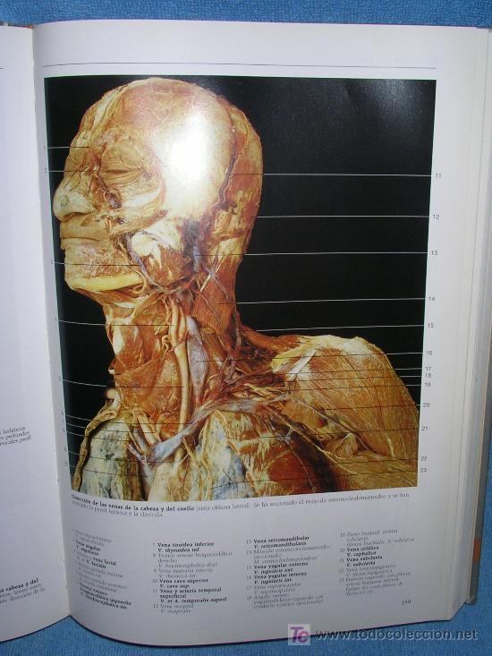 atlas fotografico de anatomia humana-rohen-yoko - Comprar en ...