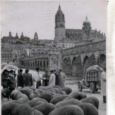 Fotografía antigua: SALAMANCA. FOTOGRAFIA. GANADEROS A LA ENTRADA DE SALAMANCA. 23 X 17 CM.. Lote 28372864